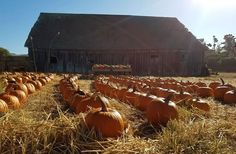 Half Moon Bay, Pumpkin, California, Fall, Outdoor, Autumn, Outdoors, Pumpkins, Outdoor Games