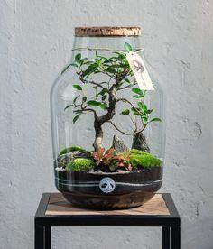 Terrarium: make your own mini ecosystem in a glass jar DIY Decor Terrarium, Terrarium Scene, Build A Terrarium, Terrarium Jar, Succulent Terrarium, Plants In Bottles, Eco Garden, Bottle Garden, Plant Art