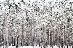 Winter forest by Viktor Kalechenkov on 500px