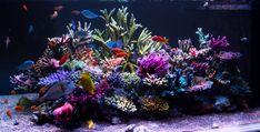 Marine Aquarium, Reef Aquarium, Saltwater Aquarium, Aquarium Ideas, Marine Tank, Coral Garden, Tropical Aquarium, Salt And Water, Reef Tanks
