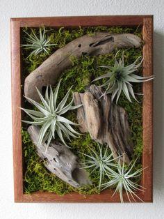 Gorgeous 80+ Air Plants Decor Ideas https://architecturemagz.com/80-air-plants-decor-ideas/