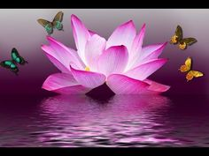 Lotus flower wall art is the perfect way to create a relaxing refuge in your own home. In fact the lotus flower has always been a symbol of purity Qigong, Home Wall Art, Wall Art Decor, Wall Murals, Third Eye, Meditation Musik, Healing Meditation, Pink Lotus, Lotus Flowers