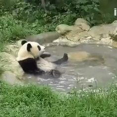 Panda having a bath - just adorable :) - more at megacutie.co.uk