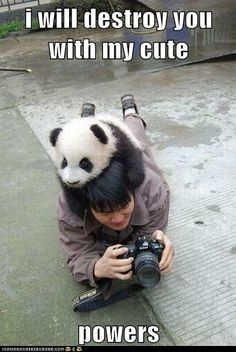 Alfa img - Showing > Pandas Funny Cute