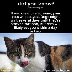 If you die alone at home, your pets will eat you. Dogs might wait several days until they're starved for food, but cats will likely eat you within a day or two.