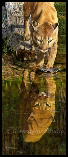 Colored Pencil Painting - Mountain Lion