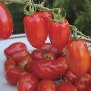 Scarlet Fizz Tomato