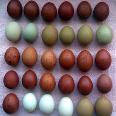 Natural colored eggs.  I love the colors scheme in this image.  The eggs are all the same shape and in a structured order but they each have different beautiful colors.  The natural colors are very calming.  Although they are completely different shades, they scheme as a whole is united because of the natural tones.