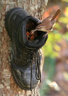 Old Shoe made into Birdhouse*