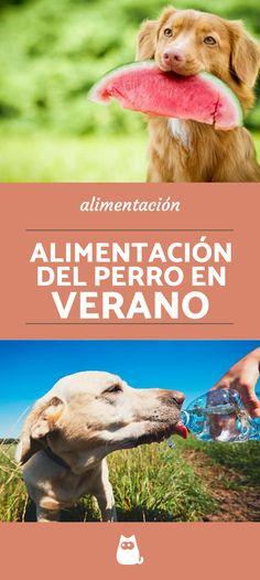 710 Ideas De Mi Perro En 2021 Cosas Para Perros Perros Mascotas