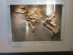 Messel Dinosaur Pit