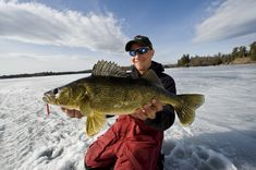 jeff-gustafson-gussy-early-ice-walleye