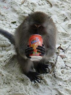 Monkey Beach #phiphiisland#thailand#peepee#khophiphi