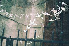 "tinyteacvps: "" Bird Installation by wearerandoms """