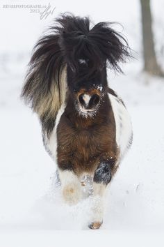 Snow does not bother this hardy pony.