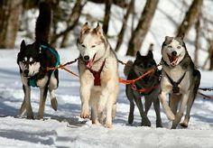 Eine unvergesslichen #Kurzurlaub im #Schnee gefällig? Sichert euch jetzt euren #Winterurlaub #Polen inkl. Frühstück, #Wellness & #Hundeschlittenfahrt für nur 139€