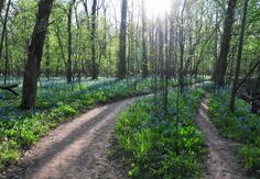 Once you've arrived at the trail, prepare to be amazed by the abundance of wildflowers in a short, 1.5-mile loop.