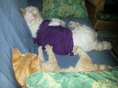 "Donna Manuel - ""Cat massaging Dog's Back."" Cat Point of view. Kapolei, HI."