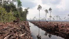 Debating deforestation in Indonesia and APP's forest conservation policy