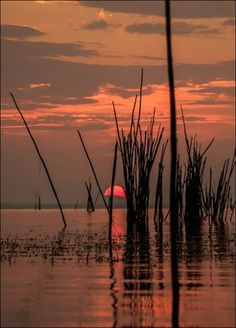 Untitled by Giusy Ciampetti on Beautiful Nature Pictures, Beautiful Sunset, Pictures Of The Sun, On Golden Pond, Amazing Sunsets, Breath In Breath Out, Fine Art Photo, Star Sky, Nature Scenes