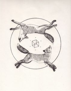 Two dead foxes and a cube. by Peter Carrington, via Flickr