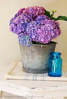 Beautiful hydrangea in vintage bucket - The Villa on Mount Pleasant