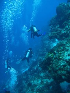 My buddy got me into scuba while working for Princess Cruises.  My first dive after getting certified in St. Thomas was Santa Rosa wall in Cozumel.  No going back after that.