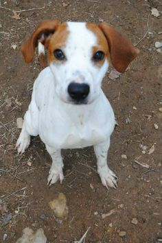 You can fill out an adoption application online on our official website.â?? Adoption Fee $350 Urgent foster needed Meet Erin Erin is a sweet and submissive girl. She loves to run and chase tennis balls and loves her belly rubs. She is very quiet...