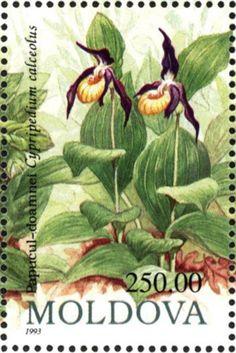 Cypripedium calceolus Moldàvia 1993 250.00