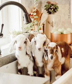 Favorite Things Friday – Edition - You are in the right place about how to make Stuffed Animals Here we offer you the most beautiful pictures about the ado Cute Creatures, Beautiful Creatures, Animals Beautiful, Cute Baby Animals, Animals And Pets, Funny Animals, Cute Goats, Funny Goats, Baby Goats
