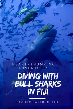 The most exhilarating underwater adventure of our lives - shark diving in Fiji!