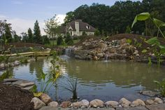 Meadows Farms - Meadows Farms - Landscaping in Virginia, DC, Maryland and West Virginia