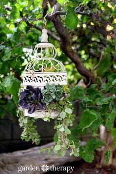 How to Make a Birdcage Succulent Planter: Turn a birdcage into a hanging basket planter with a few simple modifications and the addition of gorgeous plants. Succulents are perfect for a project like (Porch Step Plants) Succulent Planter Diy, Succulent Centerpieces, Basket Planters, Succulent Gardening, Garden Planters, Planting Succulents, Container Gardening, Planter Ideas, Organic Gardening