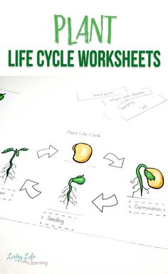 Gardening season is here so learn about plants with these fun plant life cycle worksheets for kids. Get them excited about plants in your own backyard. Learn about the parts of a plan and their life cycle stages. Sequencing Activities, Printable Activities For Kids, Science Activities For Kids, Worksheets For Kids, Science Fun, Free Printables, Biology Experiments, Biology Lessons, Plant Life Cycle Worksheet