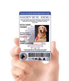 XpressID Holographic Service Dog ID Card Custom Includes Registration to National Dog Registry *** Check out the image by visiting the link. (This is an affiliate link) Emotional Support Animal, Support Dog, Information Processing, Dog Id Tags, Therapy Dogs, Animal Projects, In Case Of Emergency, Animal Cards, Service Dogs