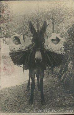 The Nanny Donkey