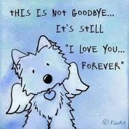 Loss Of A Pet Quote Pleasing A Peaceful Death For Your Pet Without Guilt And Regretif