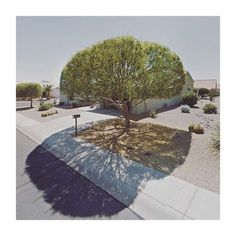 Tree's intricacy in shadow, Sun City West, AZ ~ Jacqui Kenny. Sun City Arizona, Arizona Usa, Google Street View, Shadow Tree, Shadow Play, Sun City West, Flora, Minimalist Photos, Desert Life