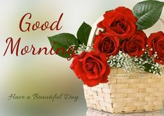 Good Morning Beautiful Flowers Pictures HD Wallpapers - HD Wallpaper Look Good Morning Romantic, Good Morning Beautiful Flowers, Good Morning Roses, Free Good Morning Images, Good Morning Texts, Good Morning Picture, Good Morning Greetings, Good Morning Good Night, Morning Pictures