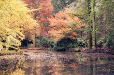 8 x 12 Print  Autumn in Melbourne  Alfred by oyphotography on Etsy