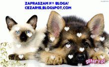 Polecam blog o zwierzętach cezar15. Jest naprawdę ciekawy.