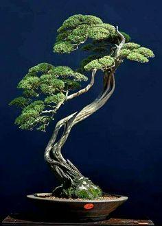 Nice literati style #bonsaitrees