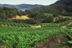 conn creek winery, st. helena
