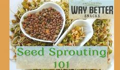 Seed Sprouting 101: The Basics (video), plus an introduction to the new EvG sponsor @Way Better Snacks!
