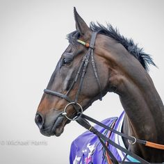 Might Bite 2017 Horse Head, Horse Art, Racehorse, Horse Photos, Equine Photography, Thoroughbred, Kentucky Derby, Horse Racing, Beautiful Horses