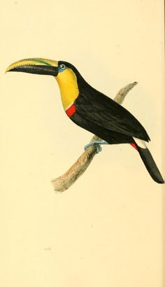 v. 3 - Zoological illustrations, or, Original figures and descriptions of new…