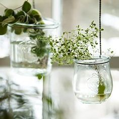 "Terrain Weck in the Window #shopterrain ""Suspended Weck jars pair with tiny terrarium plants to create an unconventional garden that catches the light in winter windows. Dress your hanging planters with a length of twine and mist as needed for a long-lasting display."""
