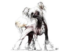 CHINESE CRESTED PAINTINGS | Chinese Crested Dog Painting - Chinese Crested Dog Fine Art Print