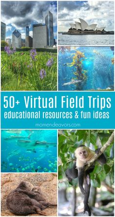 virtual field trips you can take from home, complete with educational resources and ideas! Go on an adventure without having to travel. Animal Activities, Science Activities, Educational Activities, Activities For Kids, Virtual Travel, Virtual Tour, Houston Zoo, Virtual Field Trips, Kids Education