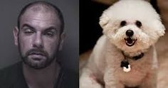 A Staten Island man, who tormented and tortured his ex-girlfriend's 15-pound dog, was sentenced to nearly a year in the Ocean County Jail, Toms River, New Jersey. Nicholas Piccolino had pleaded guilty to animal cruelty in May, and on Friday Superior Court Judge James M. Blaney sentenced Piccolino to 300 days in jail, probation for …